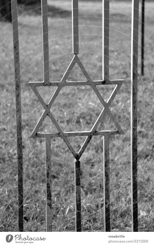 Star of David in door grille to cemetery | old Goal Metal Cemetery Cemetery door Fence Grating Jewish cemetery Monochrome Grass Meadow symbol religion