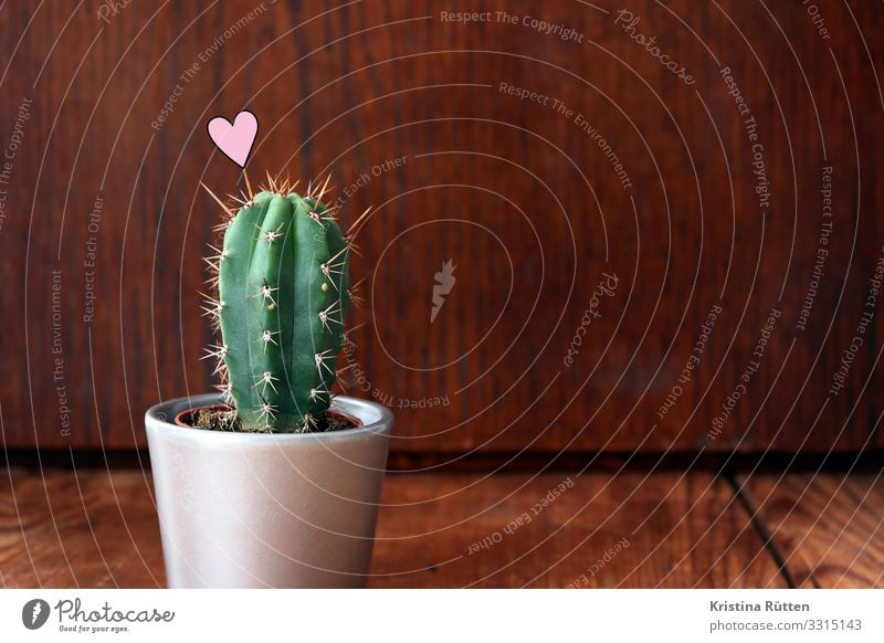 cactus heart Valentine's Day Wedding Plant Cactus Pot plant Wood Sign Heart Love Small Point Thorny Green Houseplant Flowerpot Organic Individual Sincere