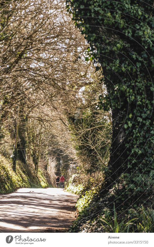 English couple on their way home streets Avenue avenue tree Ivy Pedestrian hikers go Goodbye on the way home Footpath Bright Central perspective take off