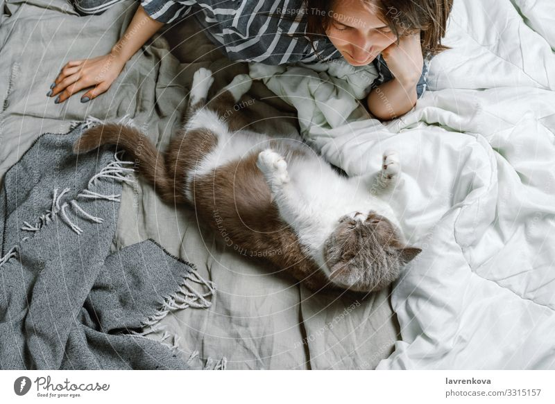 woman lying on a bed with her british breed cat adopt Delightful Animal care Cat Cute Domestic Soft Fluffy Fur coat Hand Happy Home Kitten Small Love Mammal Pet