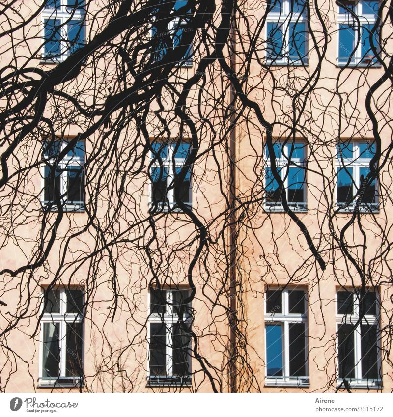 dishevelled Branch Twig Facade Window Hang Growth Berlin Pink Blue Black Structures and shapes Glazed facade Pattern Irregular Warped Tree Muddled Closed