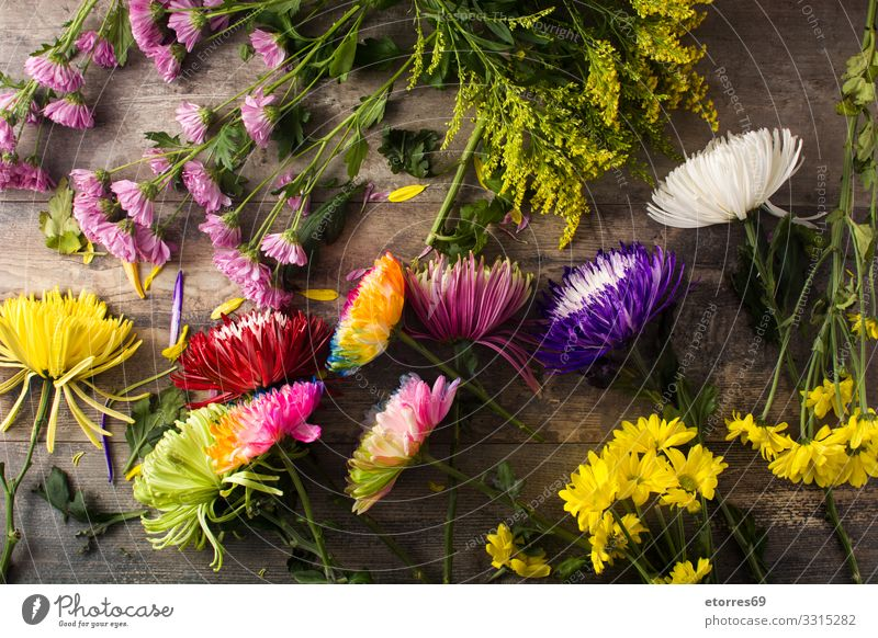 Variety of colorful spring flowers on wooden table. Nature Summer Plant Colour Beautiful Green Red Flower Yellow Blossom Spring Garden Pink Bouquet