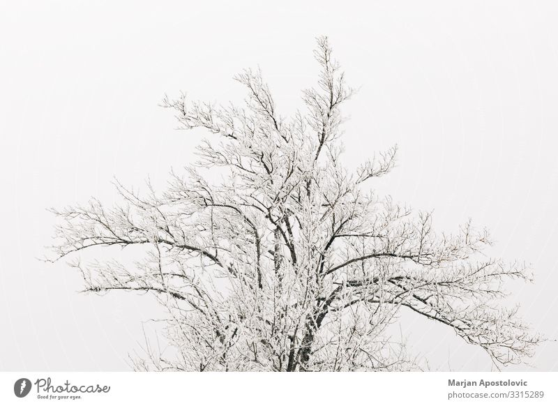 Top of trees covered with snow Nature Plant Tree Loneliness Winter Life Environment Cold Snow Moody Ice Fog Weather Climate Frost Serene