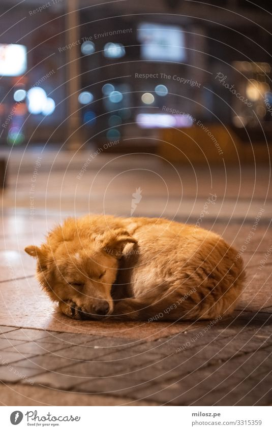 Sleeping Dog Blue Town Beautiful Animal Loneliness Calm Cold Natural Sadness Orange Brown Dream Lie Gloomy Authentic
