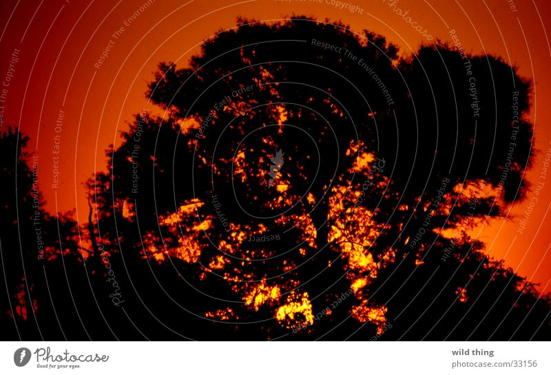 BOOM Africa boom ondergaande zon Sun son tree
