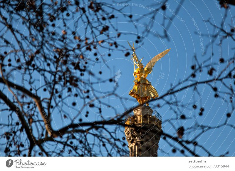 Goldelse behind Plantane Tree Berlin leaf gold Monument Germany Figure Goldelse victory statue big star Capital city Sky Heaven Deserted City Middle Park