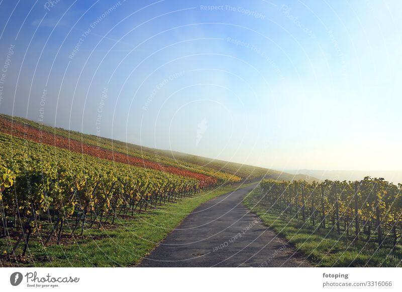 Fog in the vineyard Beautiful Tourism Trip Sun Hiking Agriculture Forestry Nature Landscape Plant Clouds Autumn Weather Tree Tourist Attraction Blue Destination