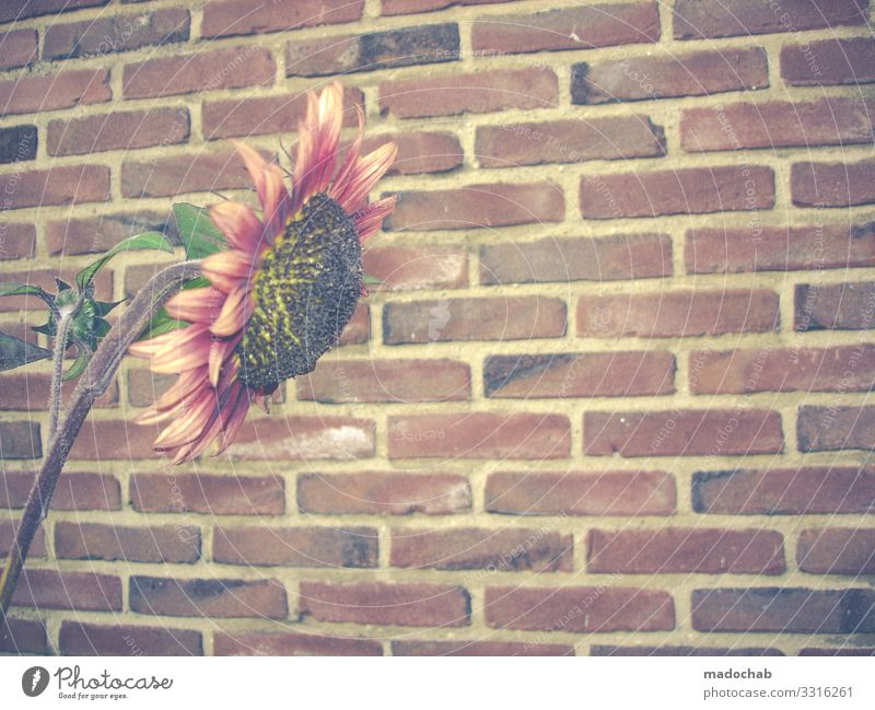 Plant Town Flower Loneliness Wall (building) Sadness Wall (barrier) Stone Growth Romance Blossoming Hope Grief Brave Brick Fatigue