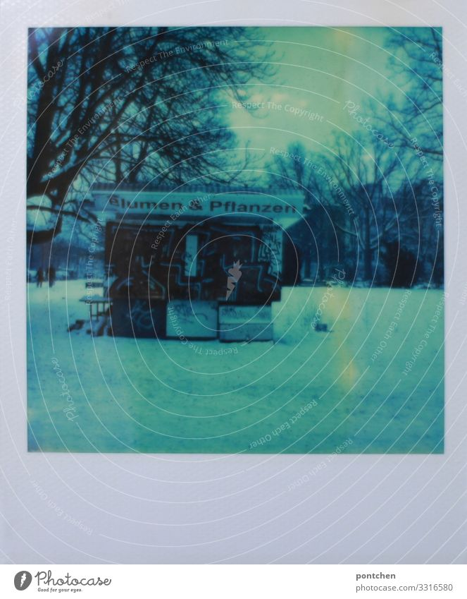 Polaroid shows flower stand in the snowy. Park in winter Workplace Trade Winter Weather Ice Frost Snow Plant Flower Blue Market stall Tree Gloomy Closed Berlin