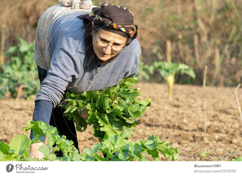 Portrait of a senior woman picking some of fresh herbal vegetables from garden Vegetable Nutrition Lifestyle Style Healthy Eating Leisure and hobbies Garden