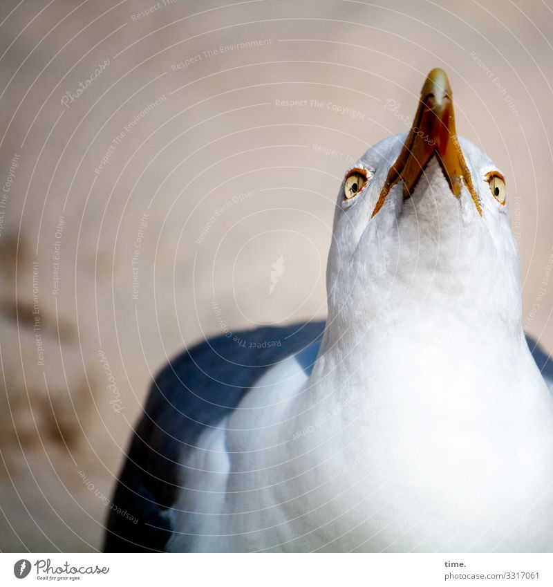 Animal Bird Sand Feather Perspective Beautiful weather Wait Observe Curiosity Discover Passion Concentrate Watchfulness Inspiration Seagull Irritation