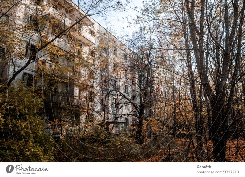 abandoned house among the trees in Chernobyl Vacation & Travel Tourism Trip House (Residential Structure) Plant Sky Autumn Tree Building Architecture Street