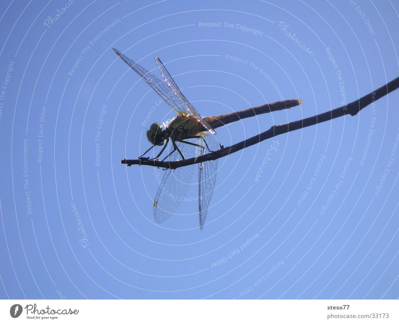 Sky Insect Branch Dragonfly
