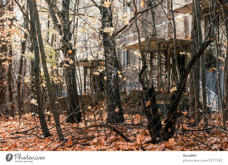 abandoned house among the trees in the city of Chernobyl Vacation & Travel Tourism Trip House (Residential Structure) Plant Sky Autumn Tree Building