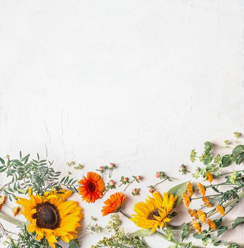 Border of lovely summer garden flowers with pretty sunflowers on white background, top view border inspiration copy space chamomile various floral border