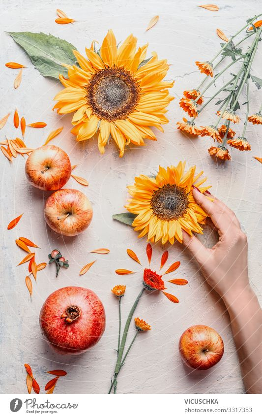Female hand holding sunflowers with sommer flowers and apples on light background, top view. Summer concept female summer seasonal arrangement harvest table