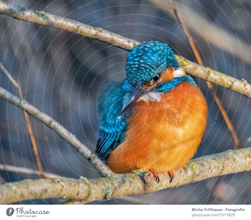 Kingfisher on the sitting room Environment Nature Animal Sunlight Beautiful weather Lakeside River bank Wild animal Bird Animal face Wing Claw Head Beak Eyes