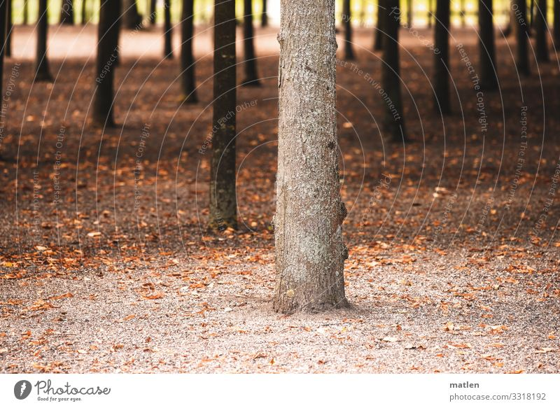 stand Plant Sand Summer Tree Park Clump of trees Brown Tree trunk Arrangement Site Colour photo Subdued colour Exterior shot Abstract Pattern