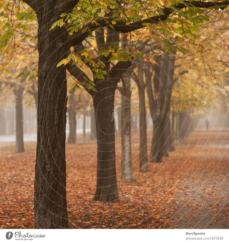 Nature City Tree Loneliness Landscape Leaf Forest Yellow Autumn Brown Park Fog Esthetic To go for a walk Autumn leaves Promenade