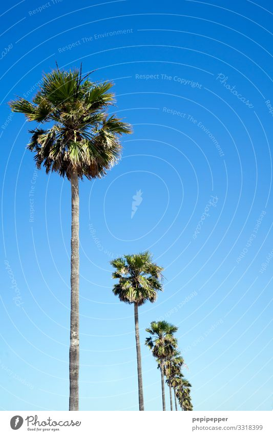palm Vacation & Travel Tourism Trip Far-off places Freedom Environment Nature Sky Cloudless sky Summer Plant Tree Palm tree Coast Beach Ocean Thin Blue