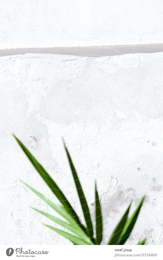 Space for notes Vacation & Travel Summer Summer vacation Plant Bushes Leaf Foliage plant Exotic Wall (barrier) Wall (building) Stone Esthetic Bright Uniqueness
