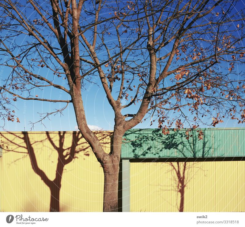 Nature Blue Green Landscape Red Tree Autumn Yellow Wall (building) Environment Facade Metal Growth Stand Beautiful weather Large