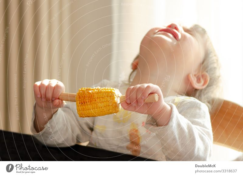 Child holds maize in his hand and throws his head back crying Food Vegetable Maize Corn cob Eating Human being Feminine Toddler girl 1 1 - 3 years To hold on