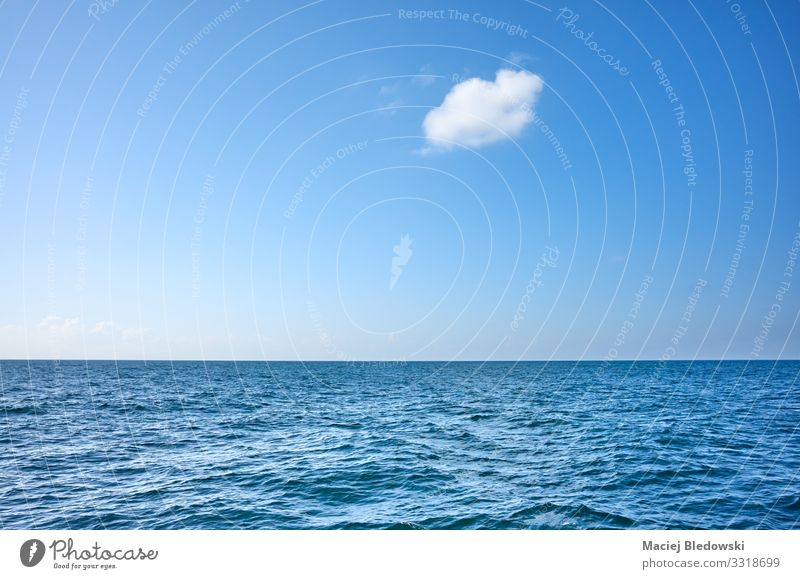 Single cloud over the ocean on a sunny day Vacation & Travel Far-off places Freedom Cruise Summer Summer vacation Sun Ocean Waves Environment Nature Sky Clouds