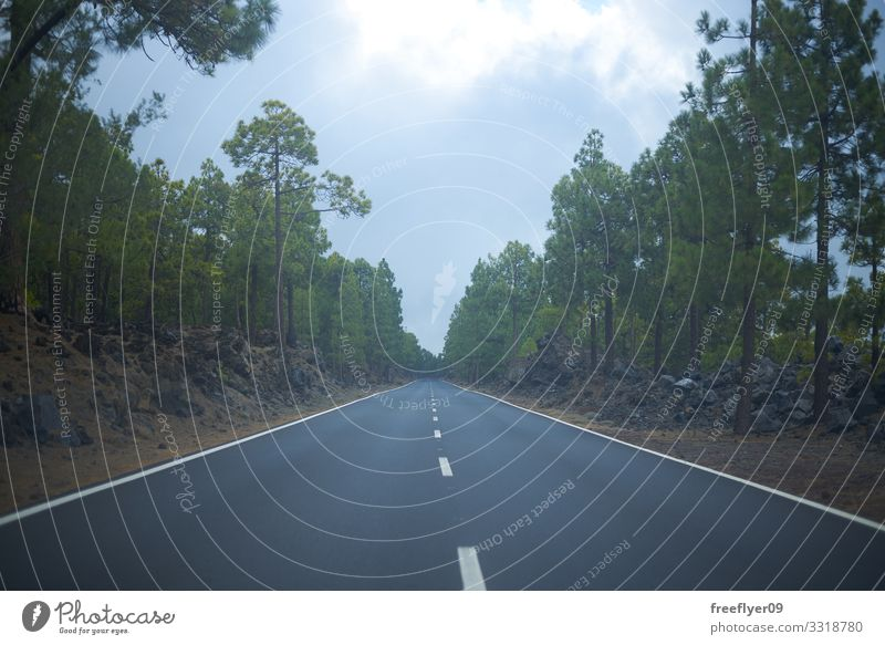 Empty road on the middle of the forest Vacation & Travel Tourism Trip Adventure Far-off places Freedom Sightseeing Mountain Nature Landscape Sky Clouds Horizon