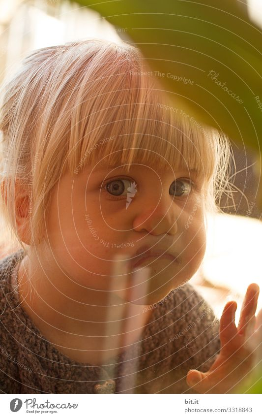 Small, golden, sweet, cute, blonde, blue-eyed girl with bangs looks curiously through the pane of glass from the window and observes, interests the other side inside, while the child presses her nose flat.