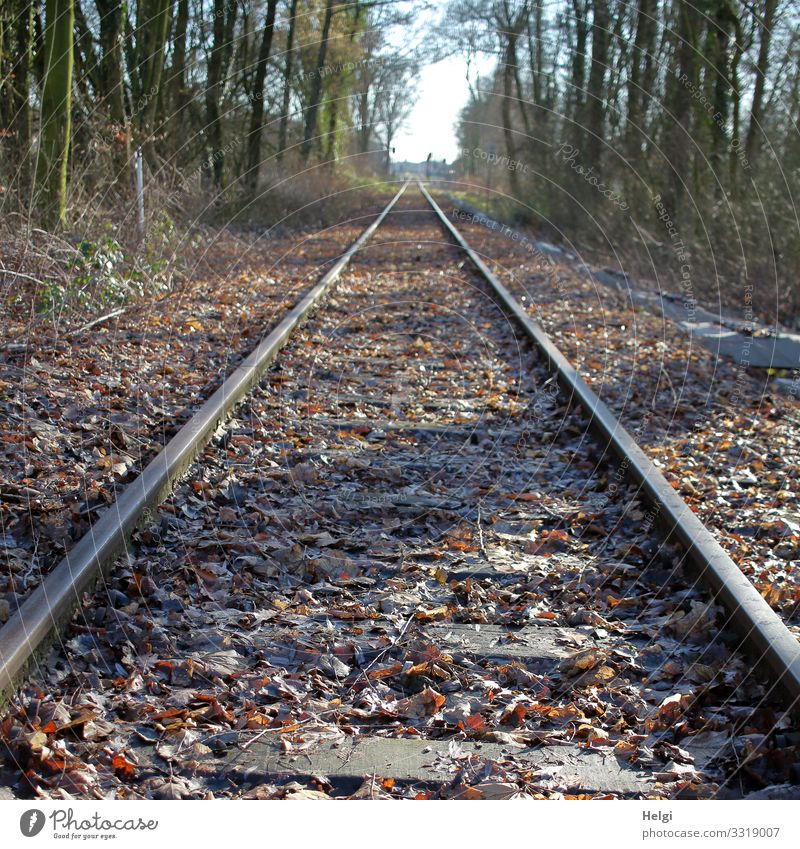 Railway tracks, which lead along between trees in perspective Environment Nature Plant Tree Leaf Traffic infrastructure Rail transport Railroad tracks Authentic