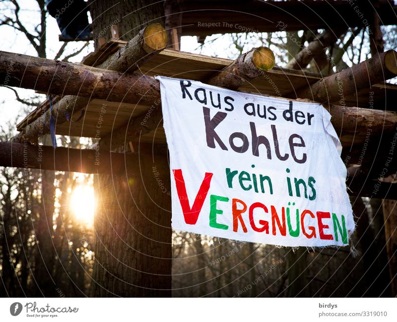 Best regards to Davos Sun Winter Climate change Beautiful weather Tree Forest Hambach Forest Tree house Banner Wood Characters Glittering Communicate Authentic