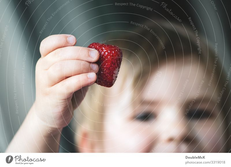 A child holds a strawberry proudly in his hand Food fruit Strawberry Human being Child girl Boy (child) by hand Fingers 1 1 - 3 years Toddler Touch To hold on
