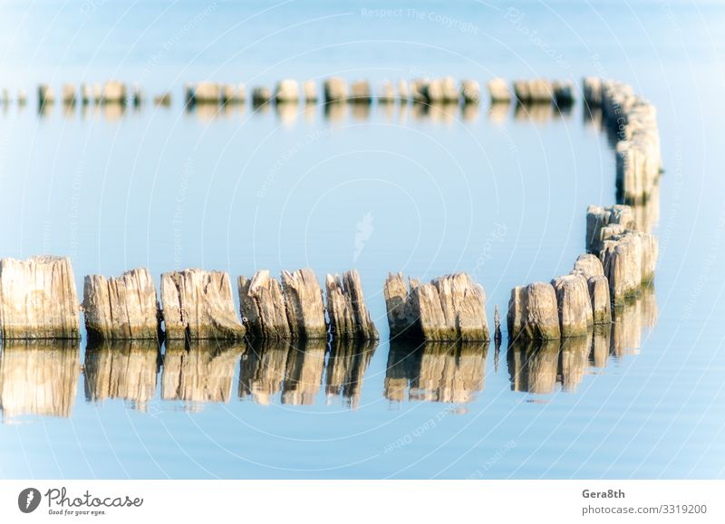 wooden posts in calm lake water in the afternoon autumn Ocean Nature Landscape Autumn Climate Pond Lake Wood Old Natural Blue Serene Colour Idyll