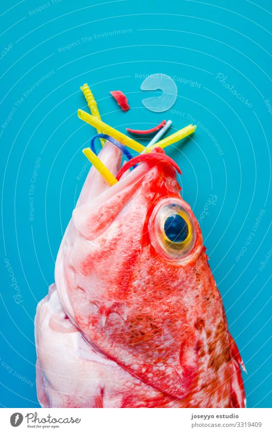 Red fish on a blue background eats plastics and micro plastics. Nature Ocean Animal Healthy Food Environment Fresh Future Fish Plastic Trash Conceptual design