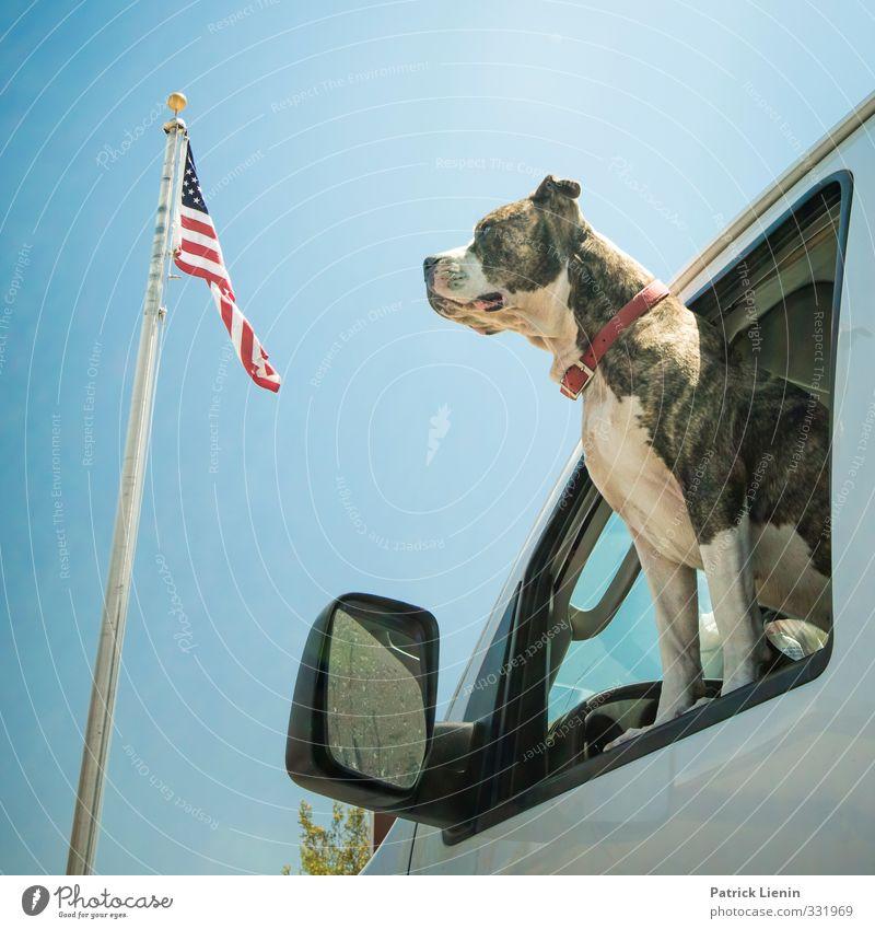 Born in the USA Lifestyle Style Joy Animal Pet Dog 1 Relationship Colour photo Exterior shot Light Animal portrait