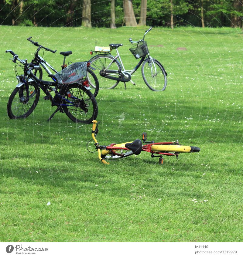 Nature Summer Plant Blue Green Red Relaxation Black Lifestyle Yellow Meadow Grass Trip Park Bicycle Beautiful weather