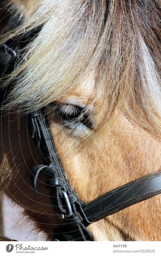 greying Farm animal Horse 1 Animal Power Peaceful Patient Juist island Horse-drawn carriage Eyes Mane Bridle Gray Wait Break Islander Road traffic