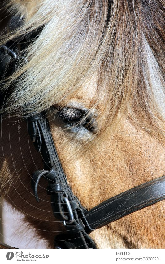Vacation & Travel Animal Eyes Gray Work and employment Power Wait Break Horse Passenger traffic Peaceful Patient Road traffic Farm animal Mane Bridle