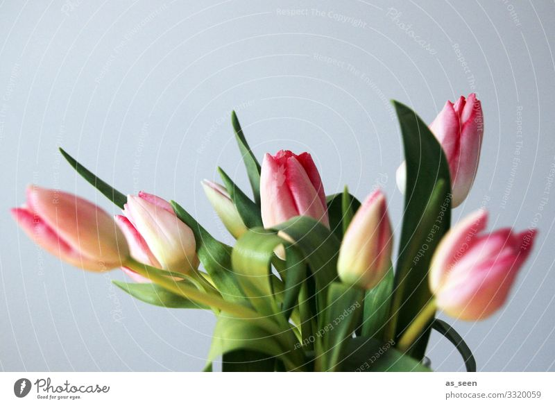 Fresh tulips Lifestyle Harmonious Decoration Valentine's Day Mother's Day Easter Nature Spring Plant Tulip Bouquet Blossoming Illuminate Authentic Natural Gray