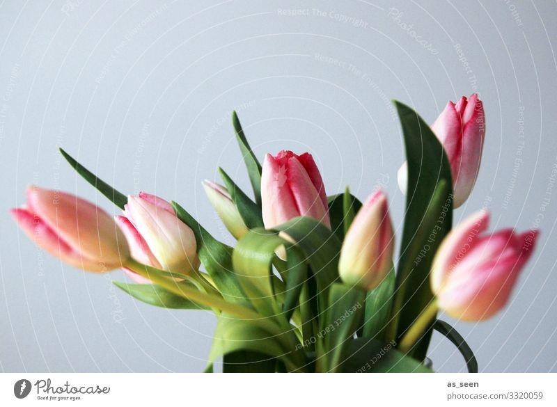 Nature Plant Colour Green Lifestyle Spring Natural Emotions Gray Pink Design Decoration Illuminate Fresh Esthetic Joie de vivre (Vitality)