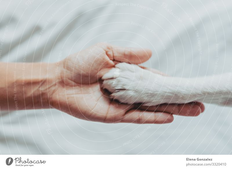 Woman hand is gently holding a white dog paw Human being Dog White Hand Animal Adults Love School Together Friendship Leisure and hobbies Fingers Cute
