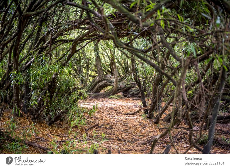 Path through dense vegetation Nature Plant undergrowth tribes branches Leaf bushes Virgin forest Forest Endemic vegetation Earth Day daylight Environment flora