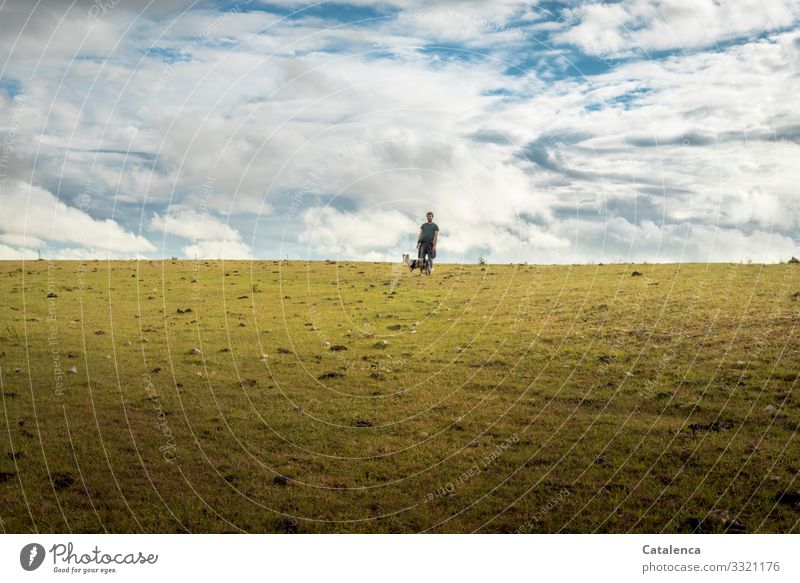 stroll Masculine 1 Human being Landscape Plant Animal Sky Clouds Horizon Summer Grass Meadow Pasture Grassland Steppe Farm animal Dog Going Small Blue Brown