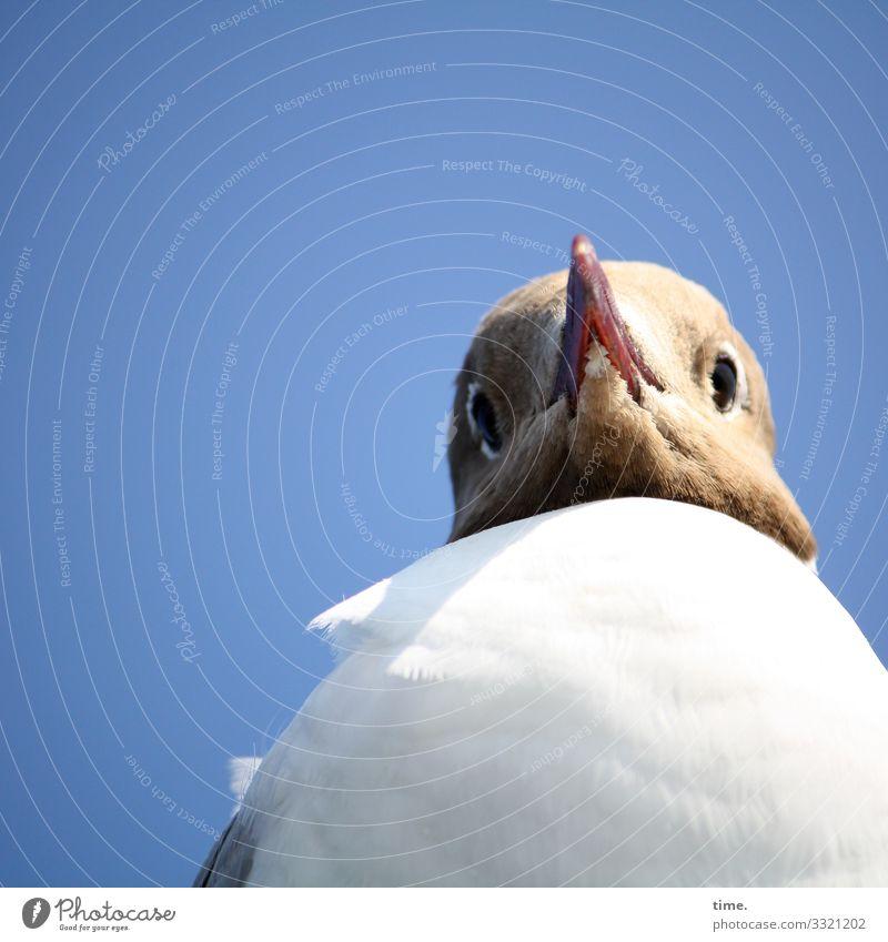 BirdPerspective Sky Seagull Beak Face Looking Beautiful weather Sunlight Shadow Young bird windy Black-headed gull