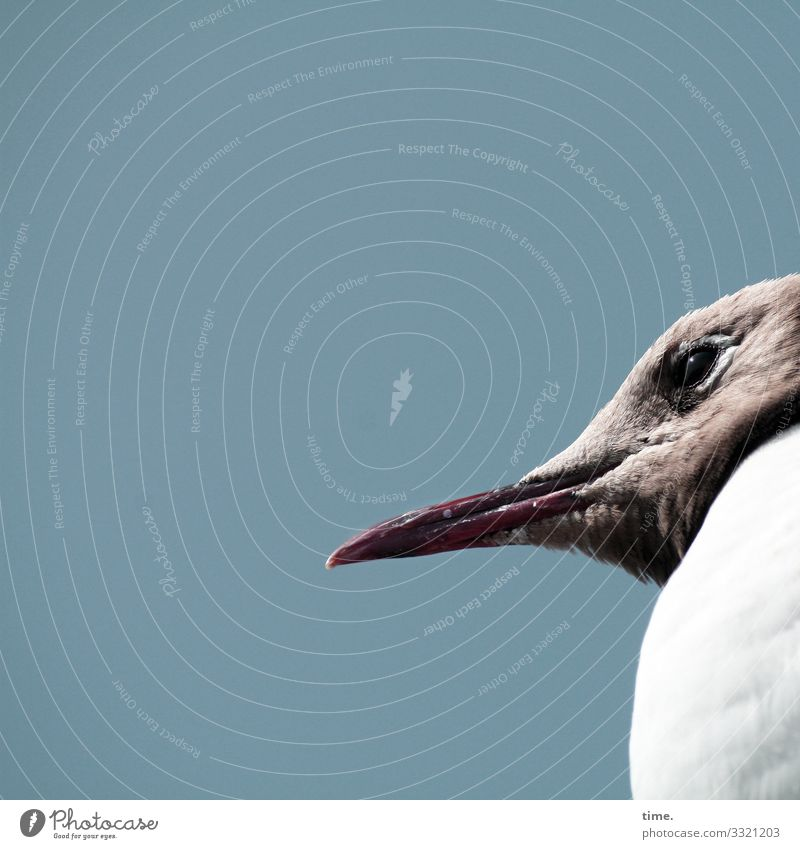 Harbour Theatre Audience Animal Bird Seagull Profile Beak Sky Earnest Concentrate Eyes plumage Looking