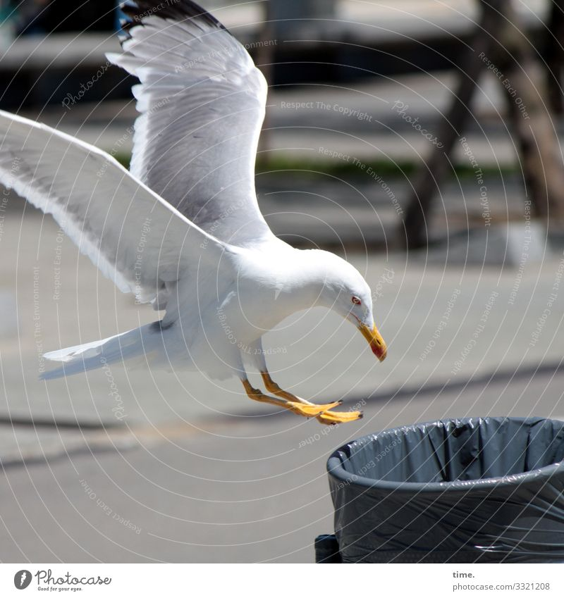 It smells like... happy hour Bird's-eye view Surprise unusual White Round structure Pattern Puzzle rubbish bin Trash Plastic bag Seagull Foraging food supply