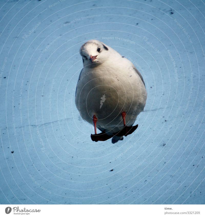 deepened interest | taken off Sky Beautiful weather Animal Bird Seagull 1 Pane Dirty Glass Observe Stand Watchfulness Endurance Unwavering Curiosity Interest
