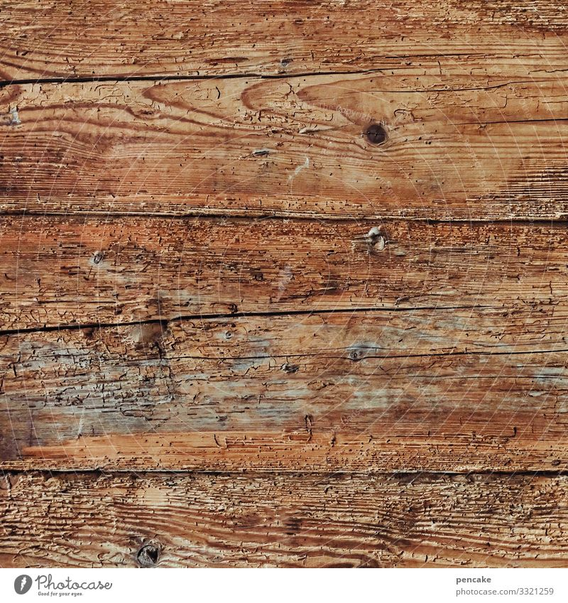 Good Wood Wall (barrier) Wall (building) Sustainability Wooden wall Old Wooden house Vintage Neutral Background Colour photo Interior shot Close-up Detail