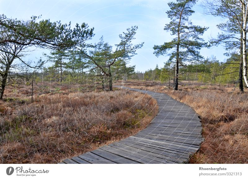 Wooden path in a moor landscape Environment Nature Landscape Plant Animal Elements Earth Air Water Sky Autumn Climate Climate change Weather Beautiful weather